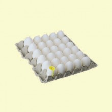 Egg yolk 45x60mm up Tray (1/30)